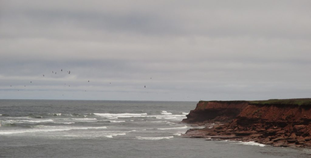 The majestic look of PEI's red cliffs